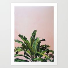 Lush green tropical palm leaves with pink background, painting in gouache.