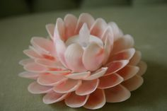 Pink Rose Tellin Seashell Water Lily With Flickering by OceanPetal