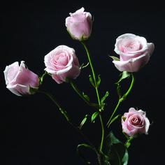 Majolika #RosesColombia #RedilRoses #ColombianFlowers #Roses #BlomFlores #Regalos