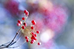 Red Berry and Web by Masaru Kuroda on 500px