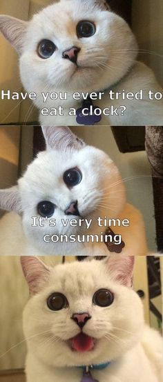 A cat eating a clock can be very time consuming.