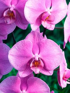 Follow these 7 tips to make sure your orchids thrive! --> http://blog.hgtvgardens.com/excellent-epiphytes-how-to-care-for-your-orchid/?soc=pinterest
