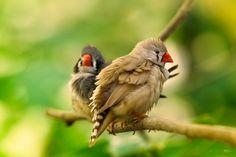For the Birds by Irene Mei, via 500px