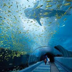 The largest aquarium is the world in Georgia