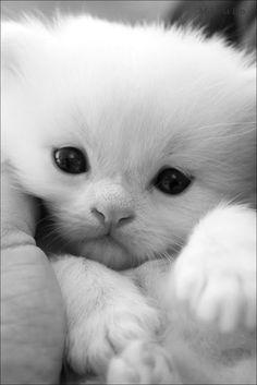 Beautifl kitty