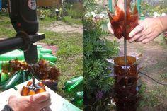 Пальма из пластиковых бутылок своими руками: пошаговый мастер класс с видео