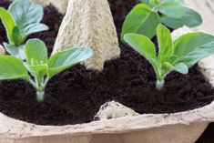 Comment cultiver son jardin pendant le confinement - Top Gardening Tips for Beginners Balcony Garden, Garden Planters, Flower Close Up, Plantation, Back Gardens, Vintage Flowers, Organic Gardening, Herb Gardening, Garden Inspiration