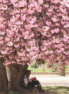 a shady spot in le jardin des plantes paris Beautiful World, Beautiful Places, Rue Mouffetard, I Love Paris, Paris Paris, Parcs, Flowering Trees, Tour Eiffel, Amazing Flowers