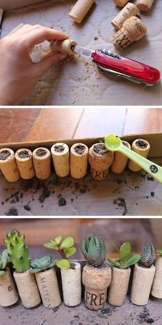 wine cork planters with succulents! Wine Cork Crafts, Bottle Crafts, Succulents Diy, Planting Succulents, Succulent Planters, Succulent Favors, Propagating Succulents, Diy Planters, Garden Projects