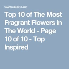 Top 10 of The Most Fragrant Flowers in The World - Page 10 of 10 - Top Inspired