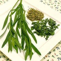 Tarragon - Cooking with Herbs
