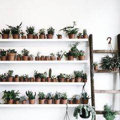 plant gang on a shelf