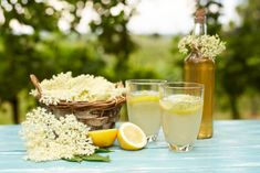 Domáci bazový sirup | Recepty.sk Stevia, Panna Cotta, Pudding, Ethnic Recipes, Desserts, Food, Super, Drink, Amazing Gifts
