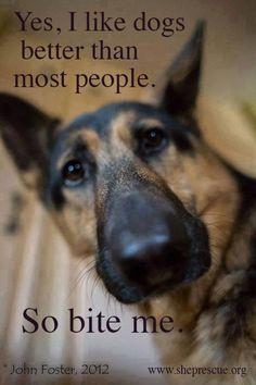 Yes I like dogs