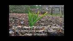 Back to Eden Nederlandse vertaling deel 3 (houtsnippers in de moestuin)