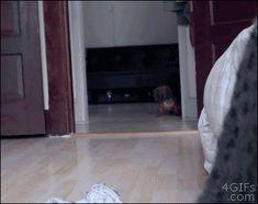 La venganza canina, no parpadees, si parpadeas estás muerto
