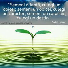 Good Motivation, Dalai Lama, Photo Illustration, Positive Thoughts, Love Life, Motivational Quotes, Mindfulness, Herbs, Positivity