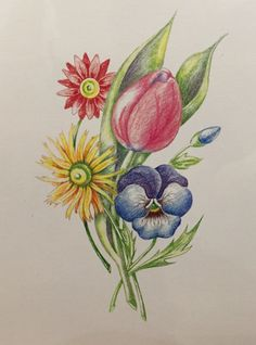 Drawing a Bouquet of Flowers with Colored Pencils - Main Avenue Galleria & School of Art Flower Drawings With Color, Realistic Flower Drawing, Flower Sketches, Colorful Drawings, Pencil Colour Painting, Colour Pencil Shading, Color Pencil Sketch, Pencil Drawings For Beginners, Pencil Art Drawings