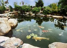 Water Gardens – A garden is a place to rest and bring out the beauty that can possess place countries worldwide.