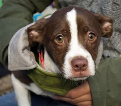 OSCAR Animal Rescue in Sparta, NJ is raising funds for a shelter facility!