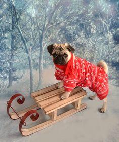 Boo The Pug Winter Wonderland #pug #snow #sled #christmas #pugcostume