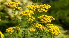 Container Plants, Flower Photos, Country Life, Good To Know, Herbalism, Flora, Health, Outdoor, House