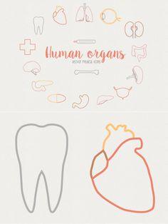Human organs - Medical icons. Human Icons. $5.00
