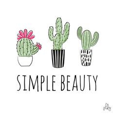 The captivating beauty of simplicity. · · · · · #simple #minimal #simplicity #cactus #cacti #plants #cute #green #pink #simplyme #beauty…