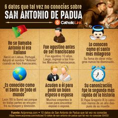 Infographic: 6 things you may not know about St. Anthony of Padua Religion Catolica, Catholic Religion, Catholic Saints, Roman Catholic, Catholic Theology, Catholic Catechism, Catholic Churches, Catholic School, Patron Saints