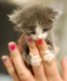 Baby kitty hugs!