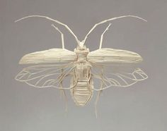 Intricate insects made entirely from matchsticks