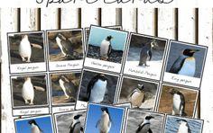 Montessori types of penguins 3 part cards