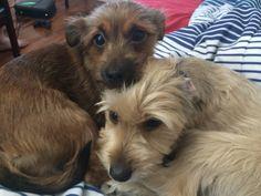 Puppies' Valiant Stand Against Bathtime Proves Futile