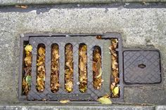 Clog drains, blocked pipes and leakage may start with the minor issues, but they can quickly escalate into the significant issues over time. Block D, Drain Repair, Plumbing, Business Professional, Pipes, Chrome, Cleaning, Twitter, News