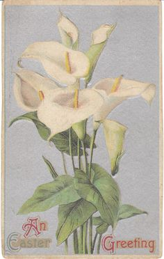 Vintage Postcard Easter Lilies Lightly Embossed Silver Holiday Card Lily Flowers | eBay
