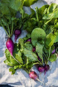 1000+ images about Ravishing Radishes on Pinterest | Radish Recipes ...