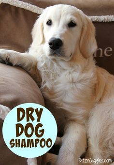 Homemade dog shampoo pinterest homemade dog shampoo stinky dog diy dry dog shampoo only 3 ingredients and keeps your dog smelling wonderful between baths solutioingenieria Gallery