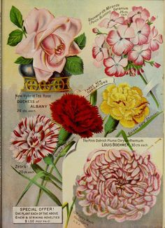 Maule's seed catalogue for 1892 page