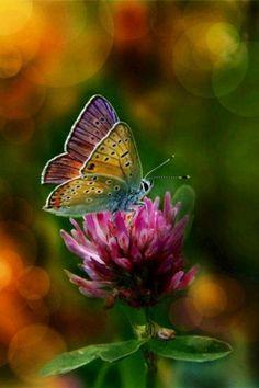 iPhone Wallpaper - Butterflies tjn