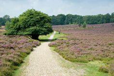 De Veluwe is een groot natuurgebied in de provincie Gelderland. Het is overwegend bebost, en populair onder (binnenlandse) toeristen.  Fietsroutes en wandelroutes - Veluwe ~ Fietsenwandelweb.nl