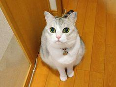 春のイチゴ柄祭り♪ うにオフィシャルブログ「うにの秘密基地」Powered by Ameba