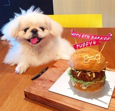 Happy birthday pekingese