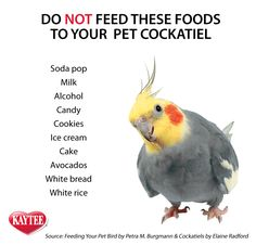 Do NOT feed these foods to your pet cockatiel. Keep them happy and safe by avoiding these among other foods. Always check with your vet before feeding human food to pets.