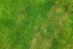 grass-texture-number-1.jpg (3150×2100)