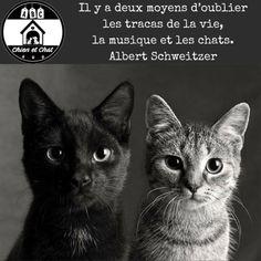 Il y a deux moyens d'oublier les tracas de la vie, la musique et les chats. Albert Schweitzer. ABC Chien et Chat Quote Memories, Albert Schweitzer, Yorkshire Terrier, Beautiful Cats, Dog Cat, Lol, Album, Friends, Cute