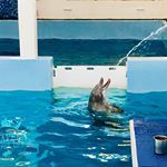 Winter the Dolphin 🐬 Dolphins, Usa, Winter, Instagram, Winter Time, Seal, America, Winter Fashion, U.s. States