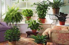 Interior Design Living Room, Living Room Decor, Kitchen Interior, Indoor Outdoor, Planter Pots, Plants, Home Decor, Bedroom, Drawing Room Decoration