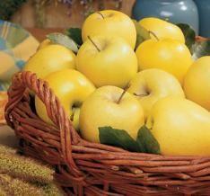 Stark® Golden Delicious Apple dwarf $18.99