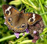 Pretty butterfly in the garden.