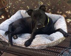 Lost Dog - Labrador Retriever - Jacksonville, FL, United States